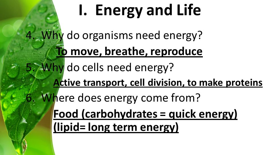 B. Two Types of Cellular Energy I. Energy and Life