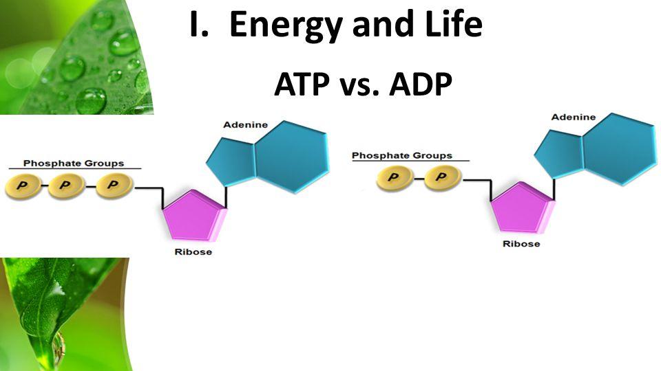 ATP vs. ADP I. Energy and Life