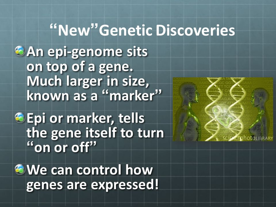 """New""Genetic Discoveries An epi-genome sits on top of a gene. Much larger in size, known as a ""marker"" Epi or marker, tells the gene itself to turn ""o"