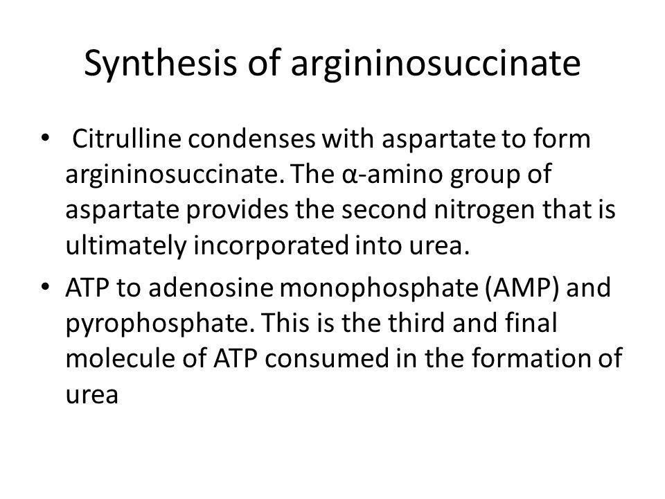 Synthesis of argininosuccinate Citrulline condenses with aspartate to form argininosuccinate.
