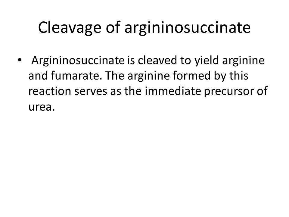 Cleavage of argininosuccinate Argininosuccinate is cleaved to yield arginine and fumarate.