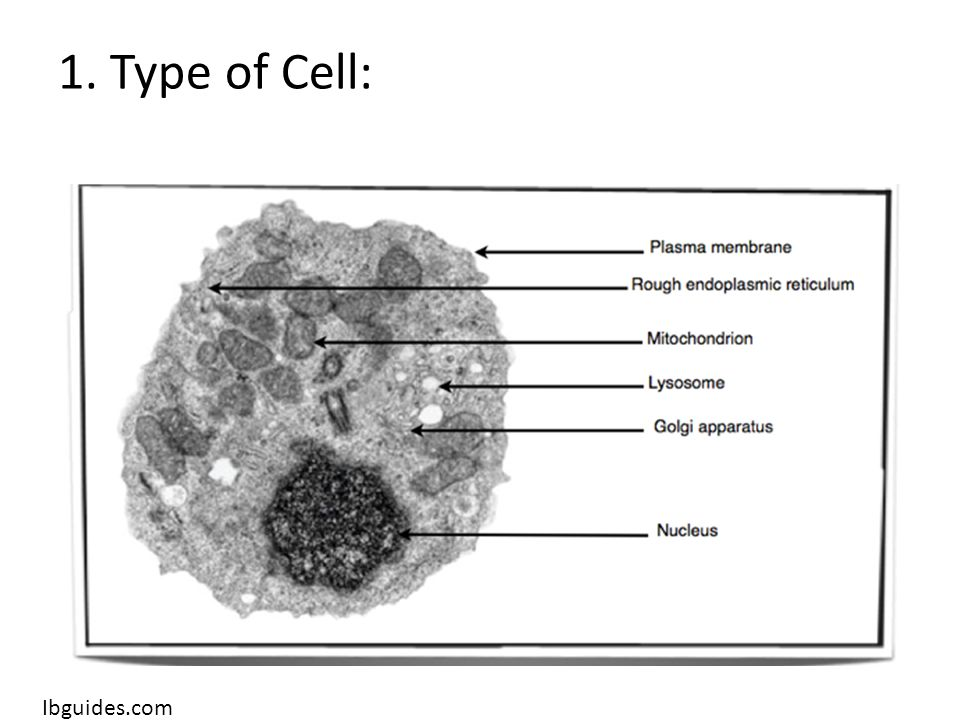 1. Type of Cell: Ibguides.com