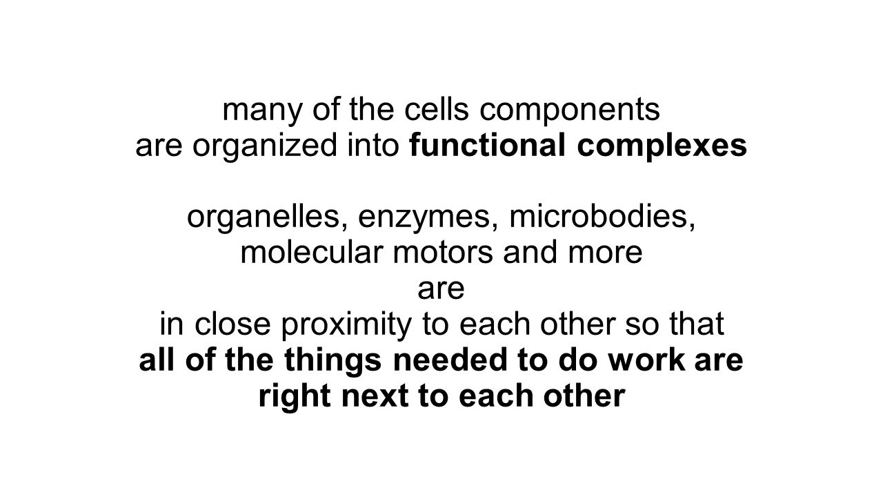 many of the cells components are organized into functional complexes organelles, enzymes, microbodies, molecular motors and more are in close proximit