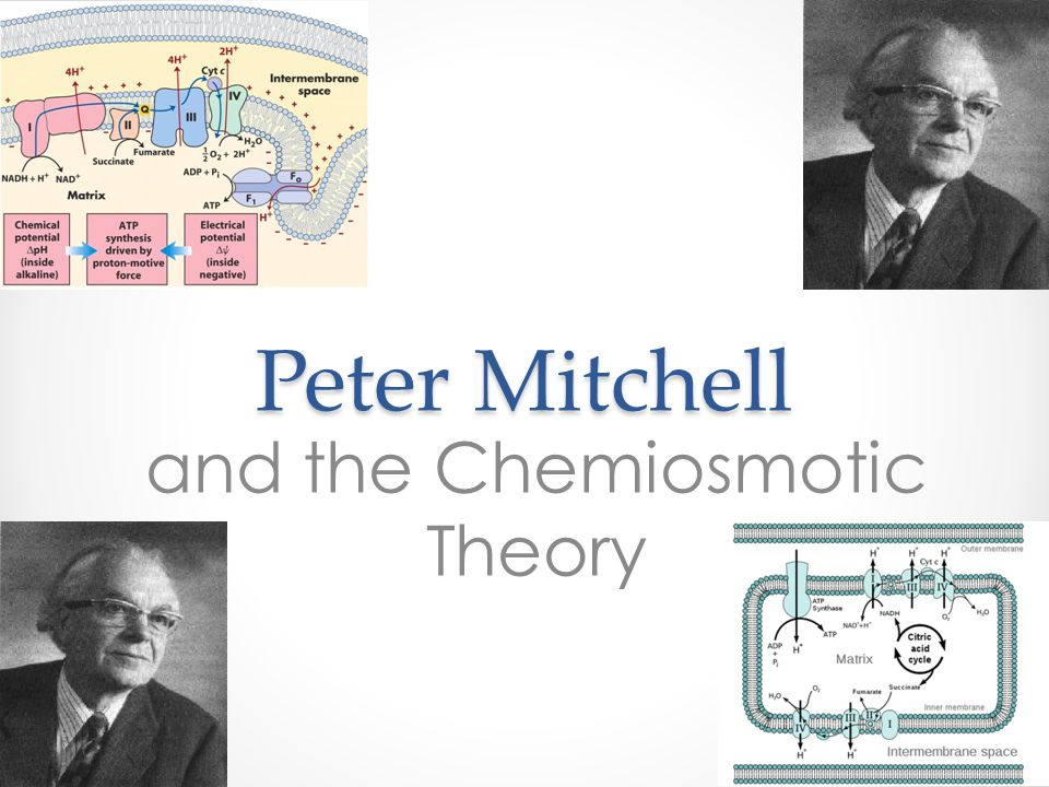 Peter Mitchell and the Chemiosmotic Theory