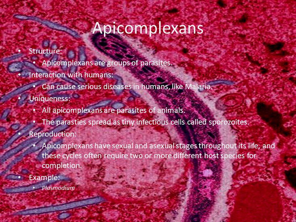 Ciliates Structure: Ciliates use their cilia for movement and feeding.