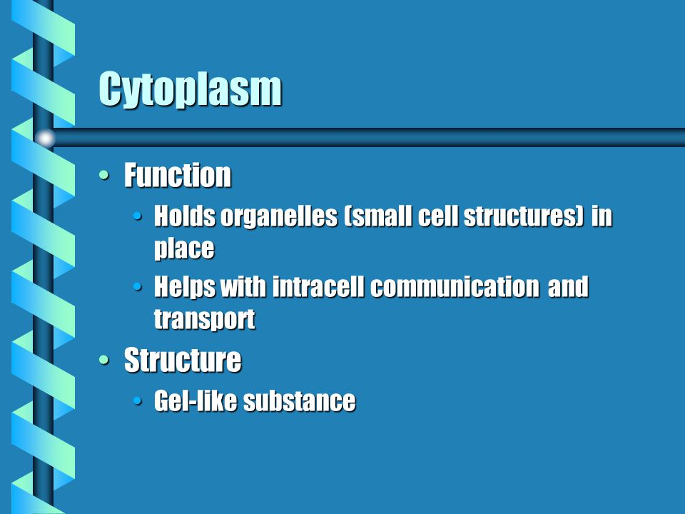 Cytoplasm FunctionFunction Holds organelles (small cell structures) in placeHolds organelles (small cell structures) in place Helps with intracell communication and transportHelps with intracell communication and transport StructureStructure Gel-like substanceGel-like substance