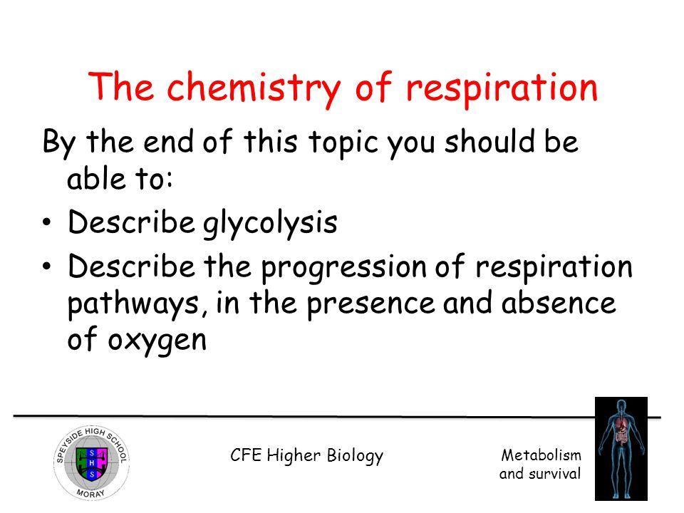 CFE Higher Biology Metabolism and survival The chemistry of respiration By the end of this topic you should be able to: Describe glycolysis Describe t