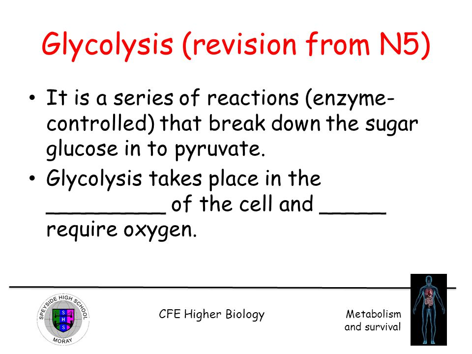 CFE Higher Biology Metabolism and survival Glycolysis (revision from N5) It is a series of reactions (enzyme- controlled) that break down the sugar gl