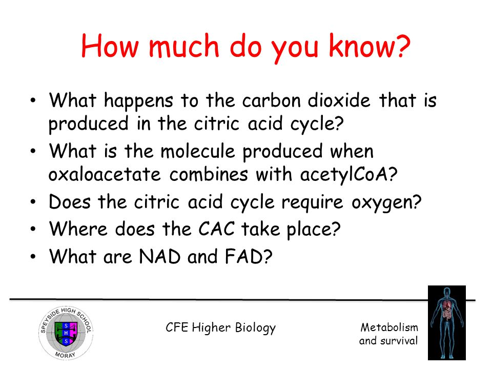 CFE Higher Biology Metabolism and survival How much do you know? What happens to the carbon dioxide that is produced in the citric acid cycle? What is
