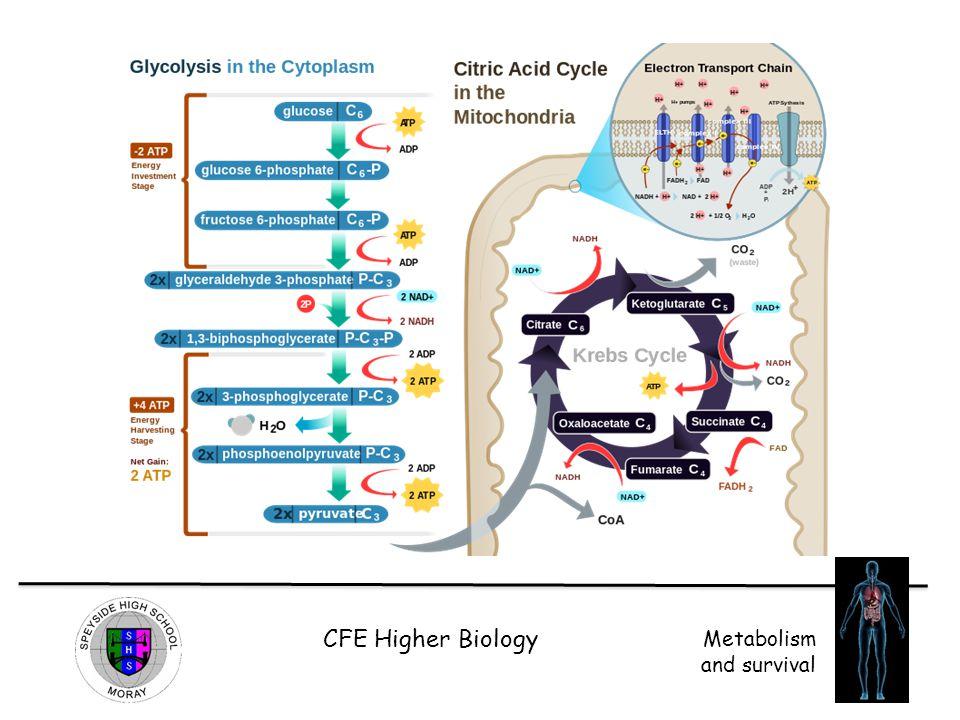 CFE Higher Biology Metabolism and survival
