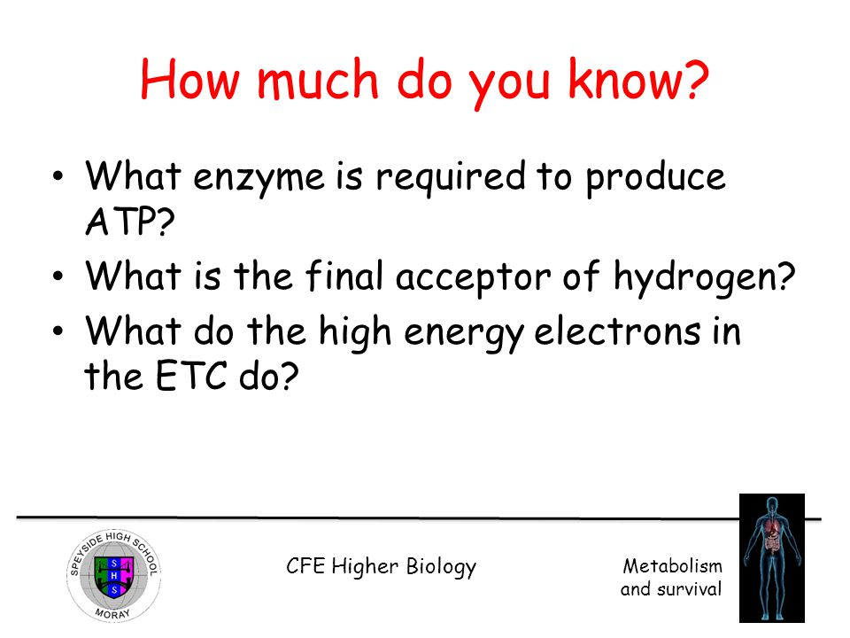 CFE Higher Biology Metabolism and survival How much do you know? What enzyme is required to produce ATP? What is the final acceptor of hydrogen? What