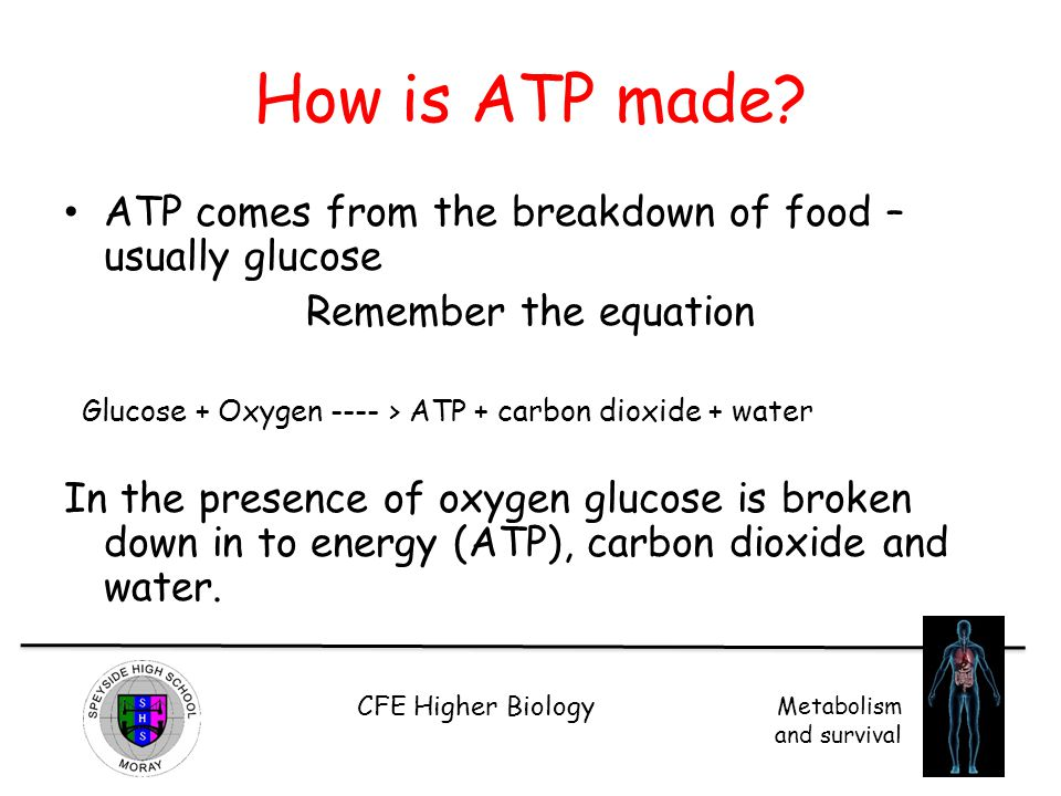 CFE Higher Biology Metabolism and survival The Electron Transport Chain Oxygen is the final electron acceptor, which combines with H ions and electrons forming water.