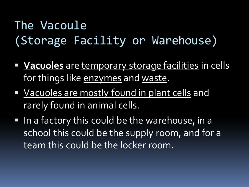 The Vacoule (Storage Facility or Warehouse)  Vacuoles are temporary storage facilities in cells for things like enzymes and waste.