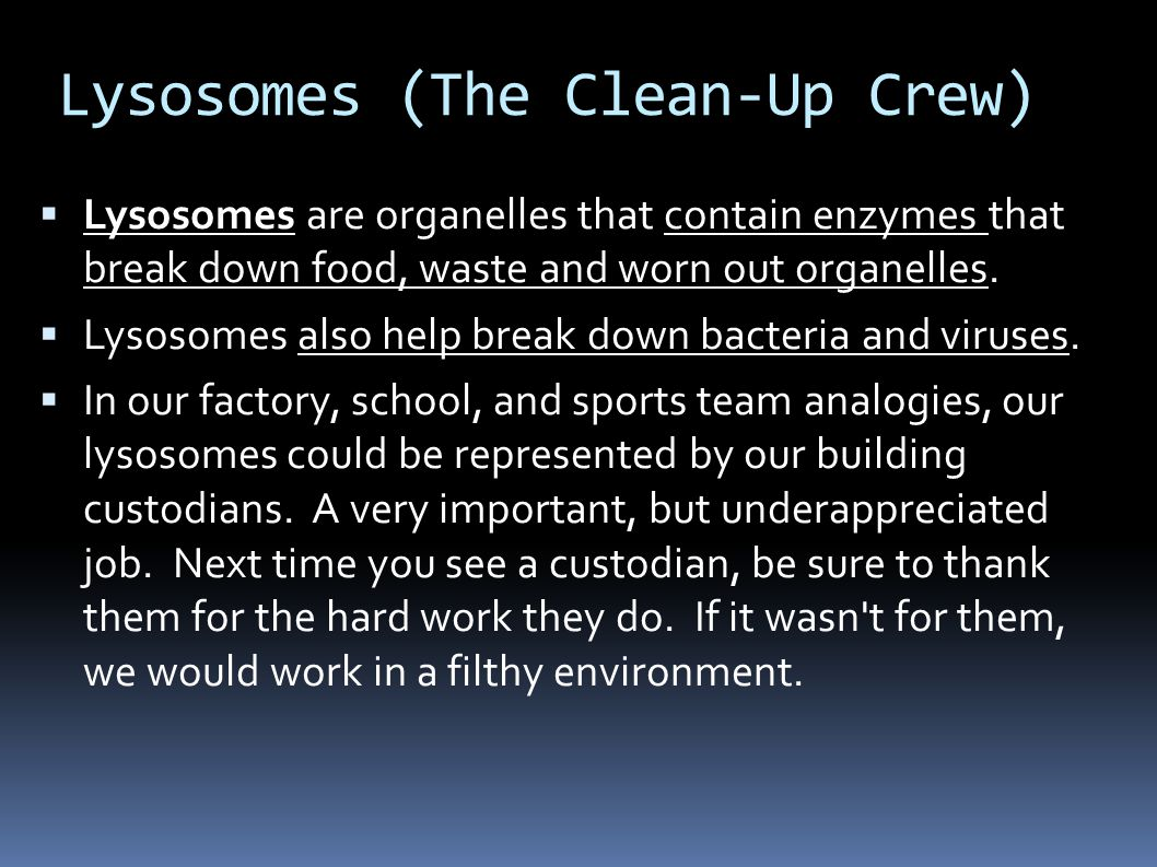Lysosomes (The Clean-Up Crew)  Lysosomes are organelles that contain enzymes that break down food, waste and worn out organelles.
