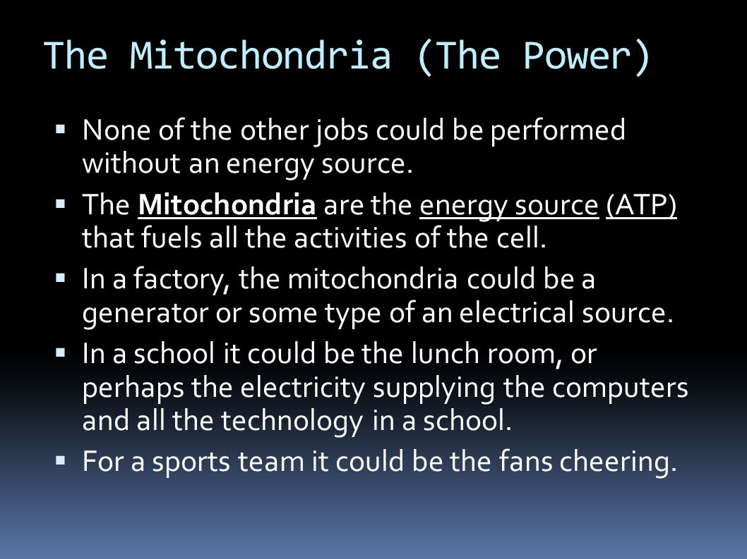 The Mitochondria (The Power)  None of the other jobs could be performed without an energy source.