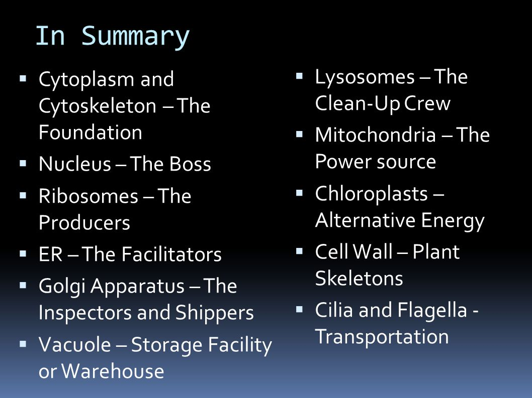 In Summary  Cytoplasm and Cytoskeleton – The Foundation  Nucleus – The Boss  Ribosomes – The Producers  ER – The Facilitators  Golgi Apparatus – The Inspectors and Shippers  Vacuole – Storage Facility or Warehouse  Lysosomes – The Clean-Up Crew  Mitochondria – The Power source  Chloroplasts – Alternative Energy  Cell Wall – Plant Skeletons  Cilia and Flagella - Transportation