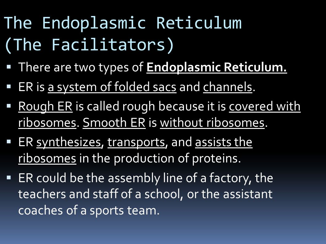 The Endoplasmic Reticulum (The Facilitators)  There are two types of Endoplasmic Reticulum.