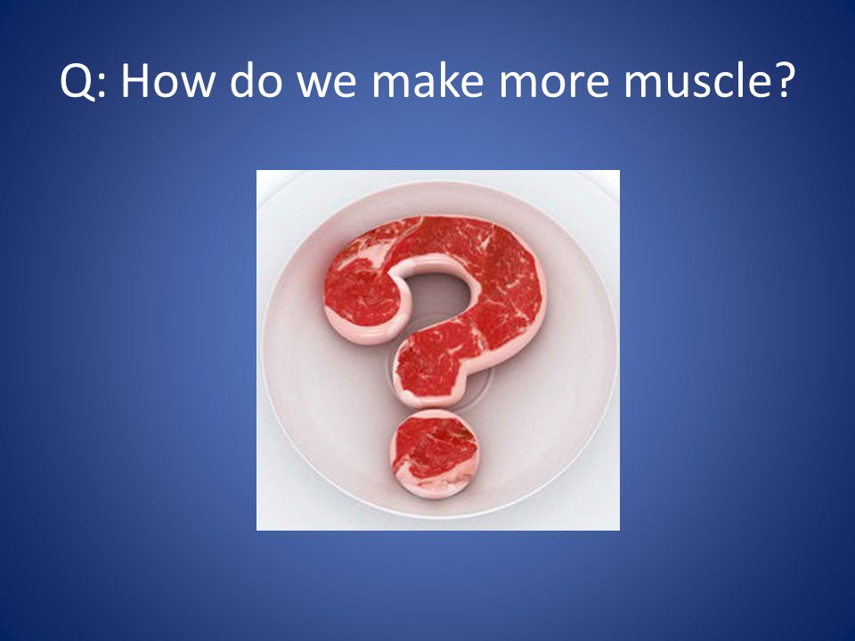 Q: How do we make more muscle?