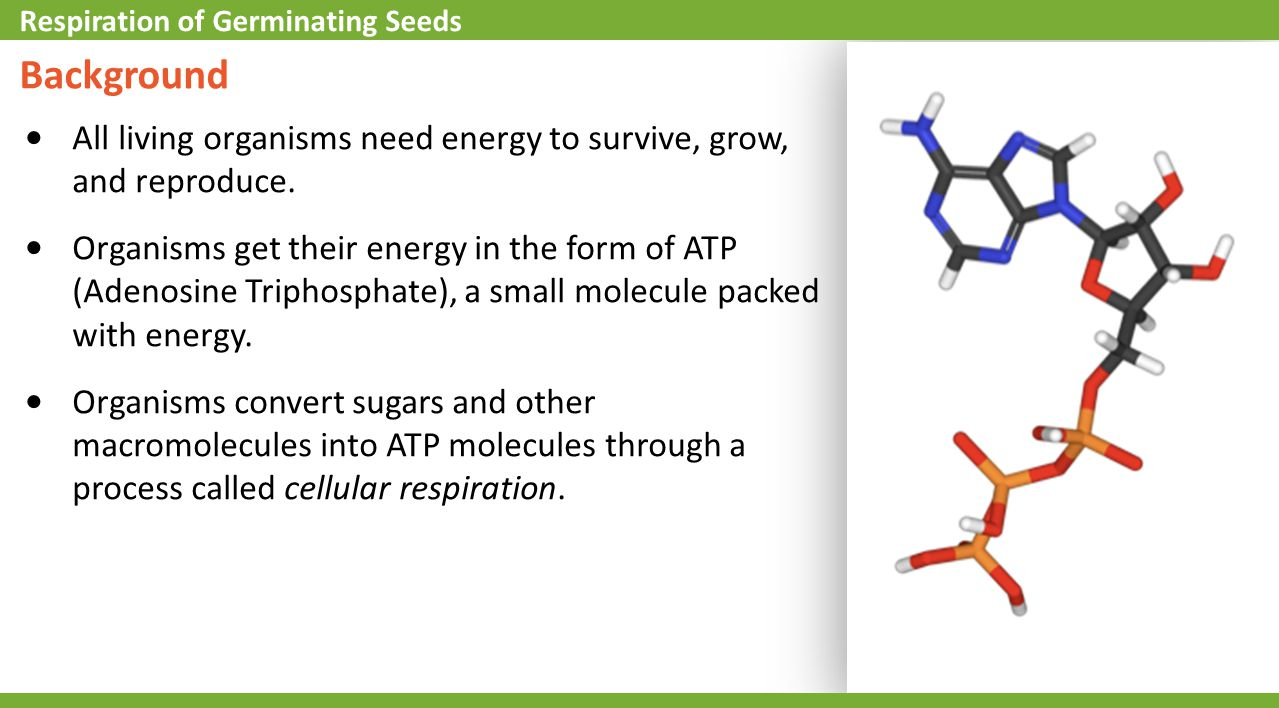 Self-Check 1.What is the main function of ATP in living organisms.