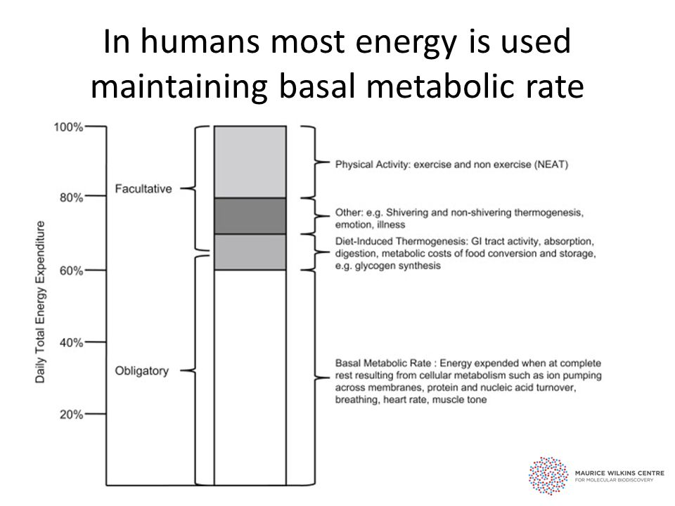 In humans most energy is used maintaining basal metabolic rate