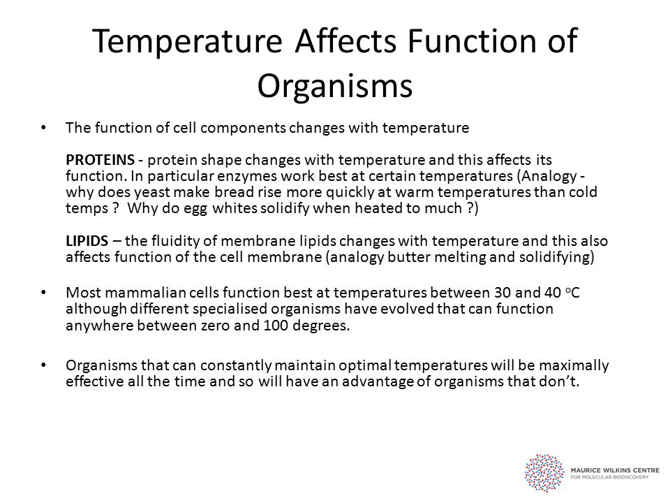 Temperature Affects Function of Organisms The function of cell components changes with temperature PROTEINS - protein shape changes with temperature and this affects its function.