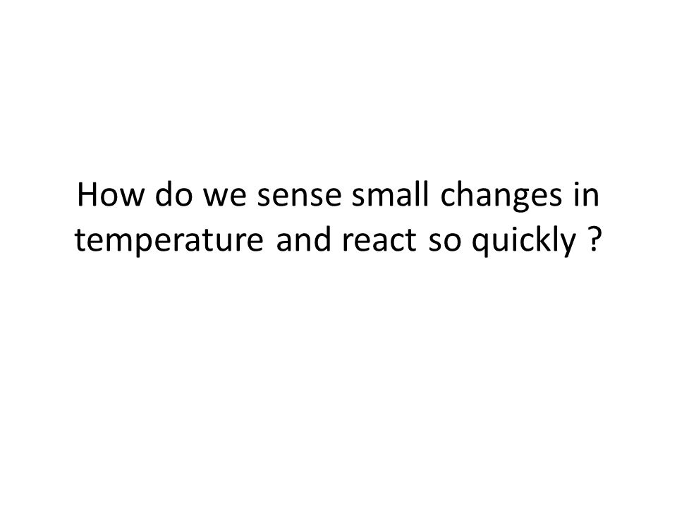 How do we sense small changes in temperature and react so quickly