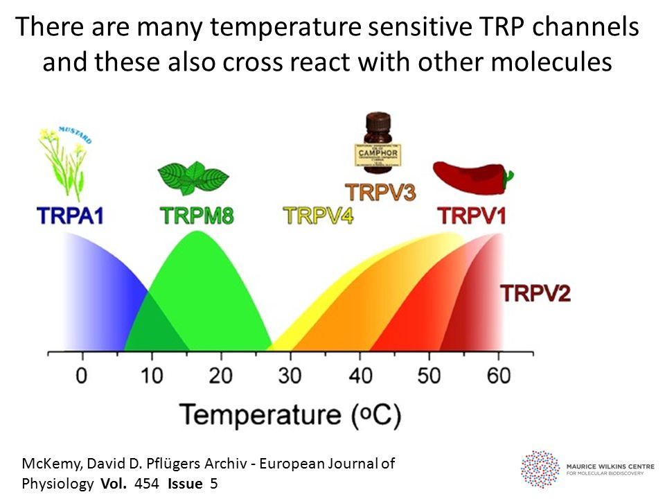 There are many temperature sensitive TRP channels and these also cross react with other molecules McKemy, David D.