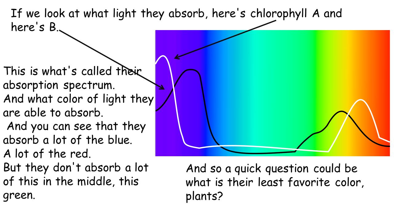 This is what s called their absorption spectrum. And what color of light they are able to absorb.