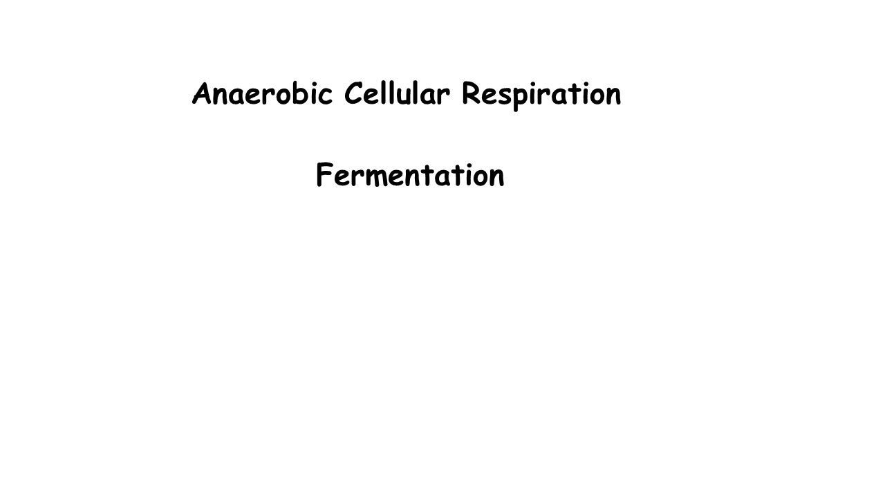 Anaerobic Cellular Respiration Fermentation