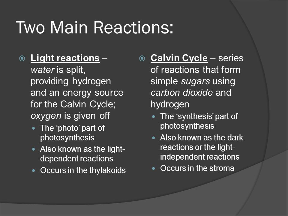 Two Main Reactions:  Light reactions – water is split, providing hydrogen and an energy source for the Calvin Cycle; oxygen is given off The 'photo'