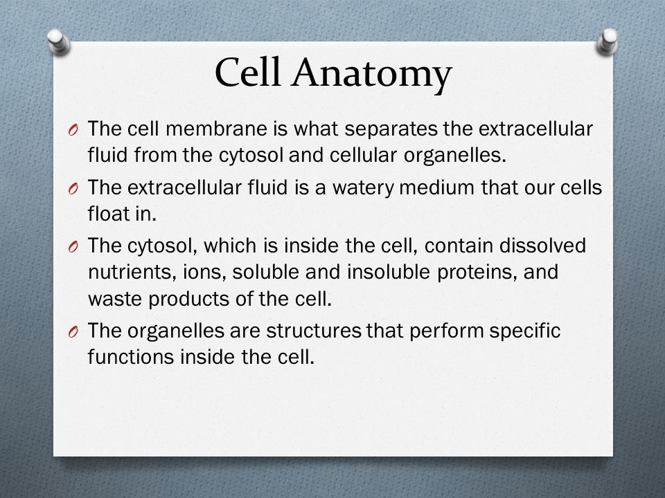 Cell Membrane  The cell membrane forms the outer boundary of the cell.