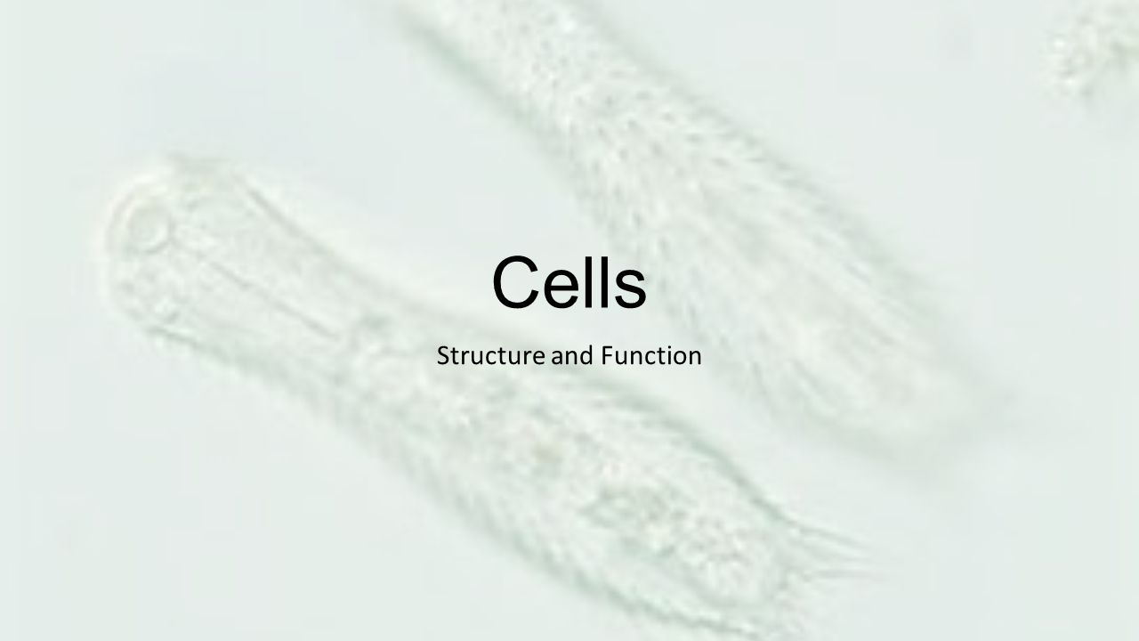 Cells Structure and Function