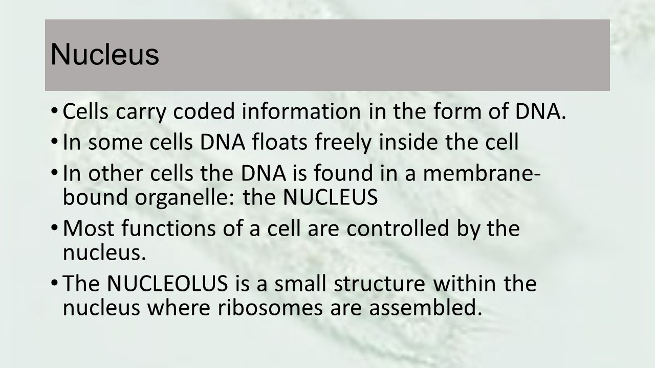 Nucleus Cells carry coded information in the form of DNA.