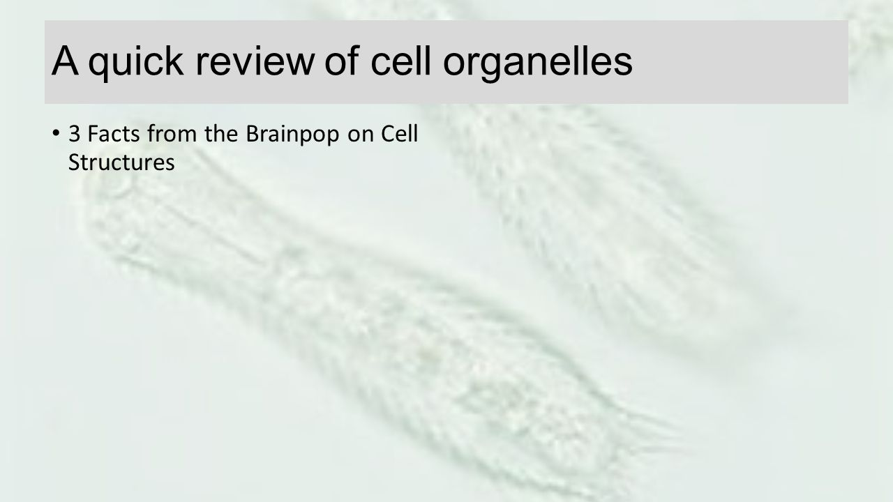 A quick review of cell organelles 3 Facts from the Brainpop on Cell Structures