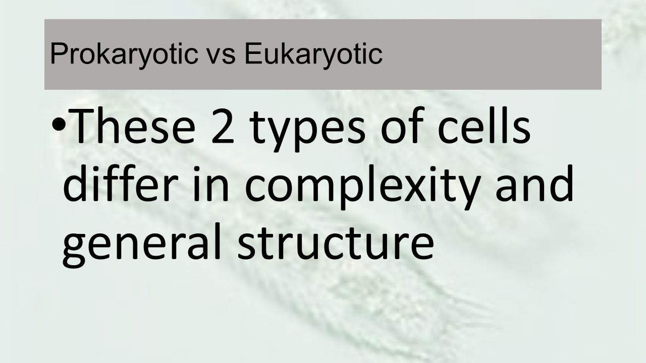 Prokaryotic vs Eukaryotic These 2 types of cells differ in complexity and general structure