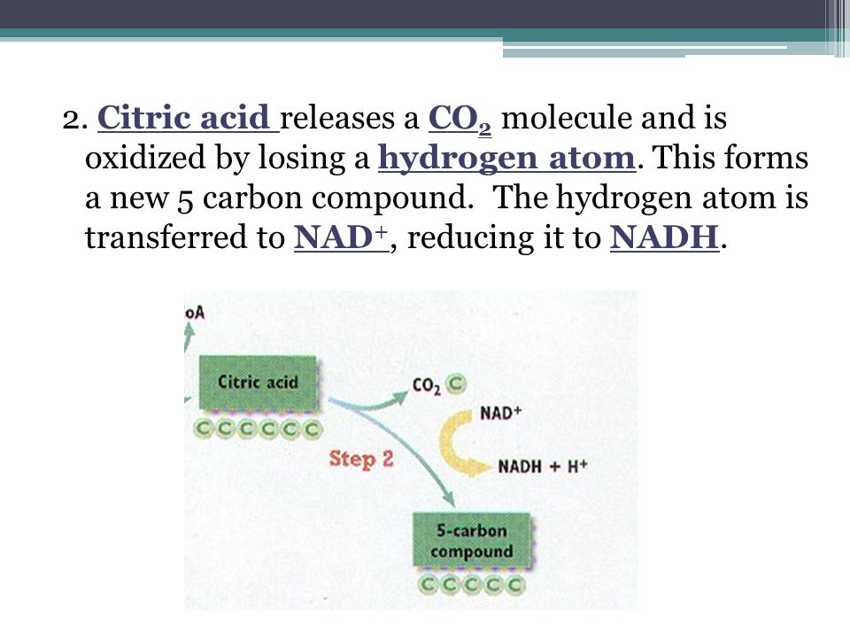 2.Citric acid releases a CO 2 molecule and is oxidized by losing a hydrogen atom.