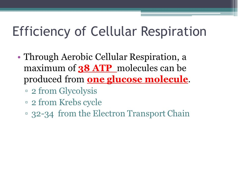 Efficiency of Cellular Respiration Through Aerobic Cellular Respiration, a maximum of 38 ATP molecules can be produced from one glucose molecule.