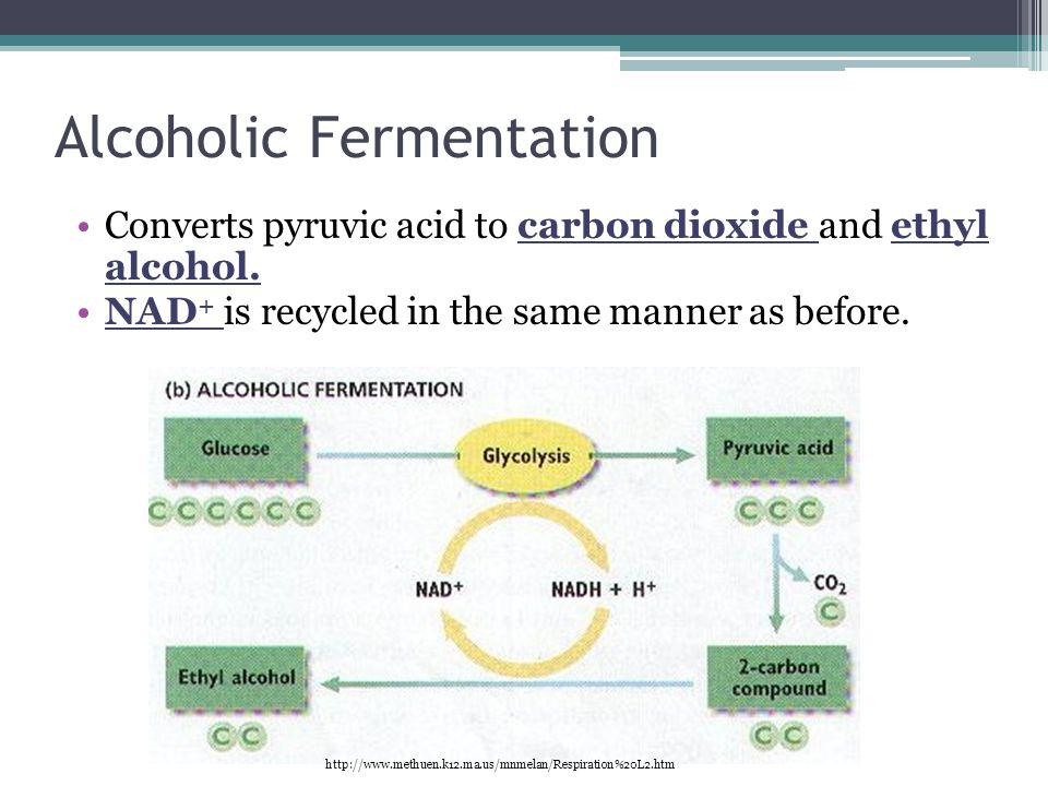 Alcoholic Fermentation Converts pyruvic acid to carbon dioxide and ethyl alcohol.