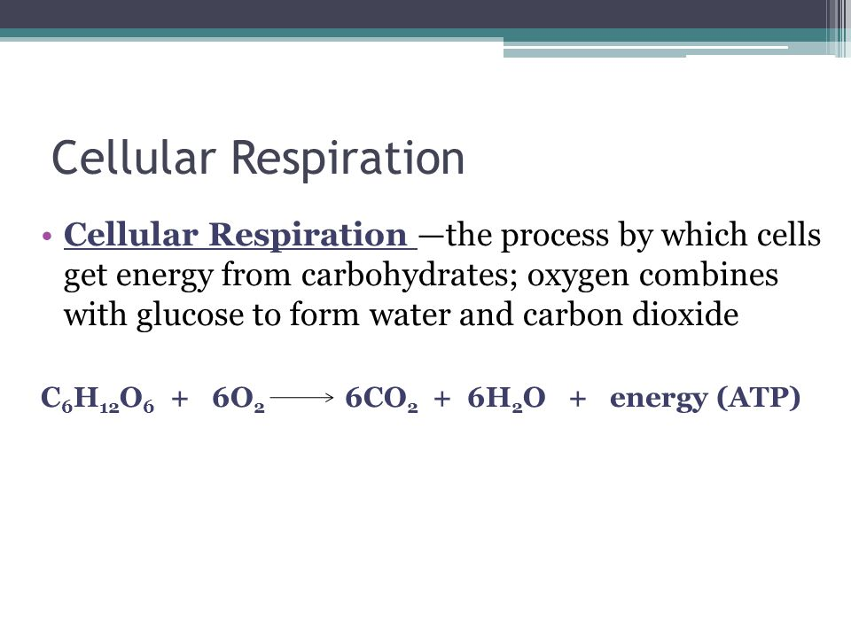 Cellular Respiration Cellular Respiration —the process by which cells get energy from carbohydrates; oxygen combines with glucose to form water and carbon dioxide C 6 H 12 O 6 + 6O 2 6CO 2 + 6H 2 O + energy (ATP)