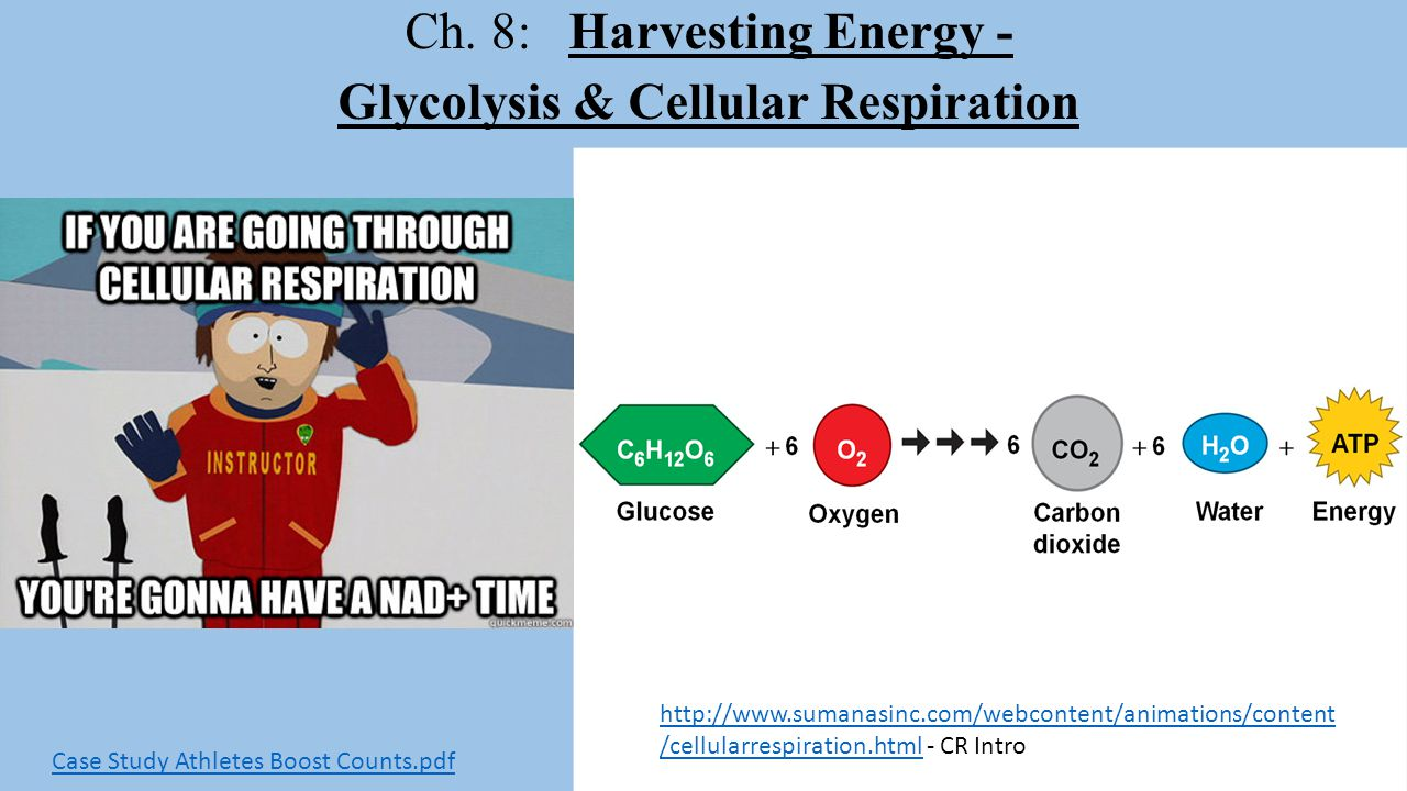 Ch. 8: Harvesting Energy - Glycolysis & Cellular Respiration http://www.sumanasinc.com/webcontent/animations/content /cellularrespiration.htmlhttp://w