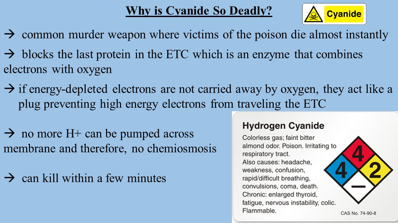 Why is Cyanide So Deadly?  common murder weapon where victims of the poison die almost instantly  blocks the last protein in the ETC which is an enz