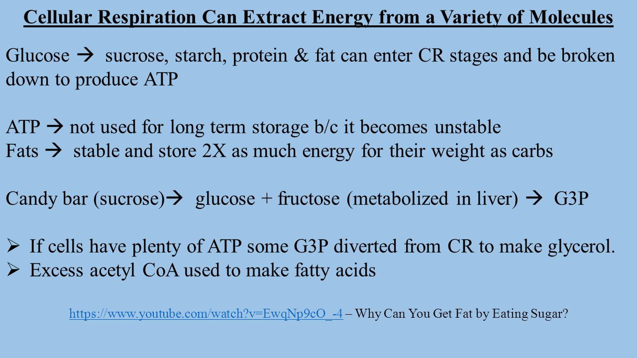 Cellular Respiration Can Extract Energy from a Variety of Molecules Glucose  sucrose, starch, protein & fat can enter CR stages and be broken down to
