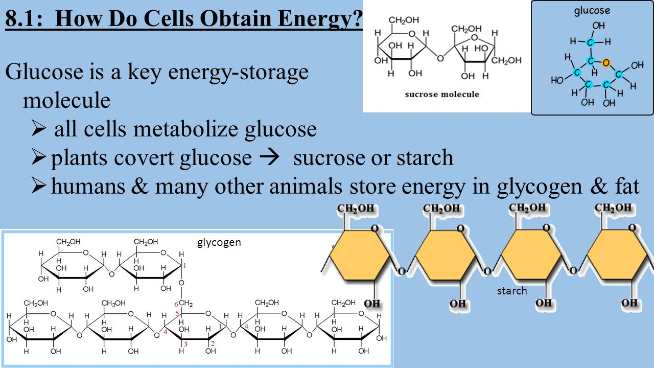 8.1: How Do Cells Obtain Energy? Glucose is a key energy-storage molecule  all cells metabolize glucose  plants covert glucose  sucrose or starch 