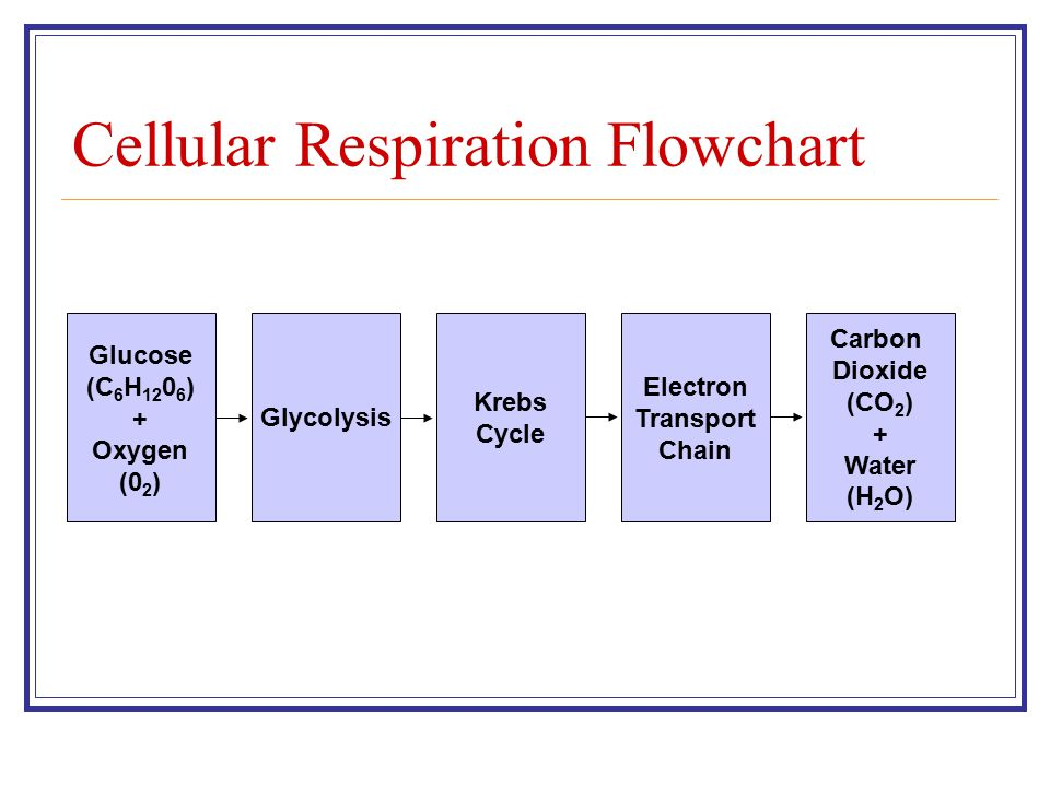 Cellular Respiration Flowchart Section 9-2 Glucose (C 6 H 12 0 6 ) + Oxygen (0 2 ) Glycolysis Krebs Cycle Electron Transport Chain Carbon Dioxide (CO