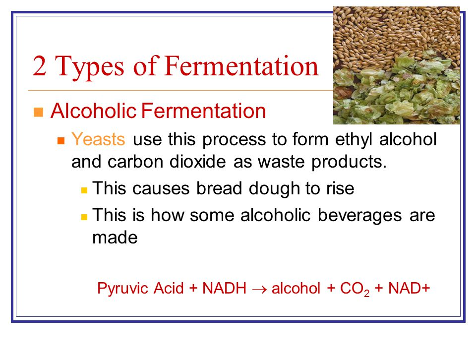 2 Types of Fermentation Alcoholic Fermentation Yeasts use this process to form ethyl alcohol and carbon dioxide as waste products. This causes bread d