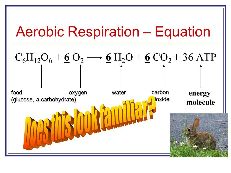 Aerobic Respiration – Equation C 6 H 12 O 6 + 6 O 2 6 H 2 O + 6 CO 2 + 36 ATP food (glucose, a carbohydrate) oxygenwater carbondioxide