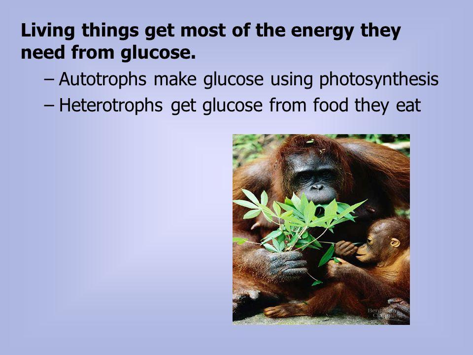 Cellular Respiration exergonic, oxygen (O 2 ) energy (glucose) energy (ATP)(H 2 O).
