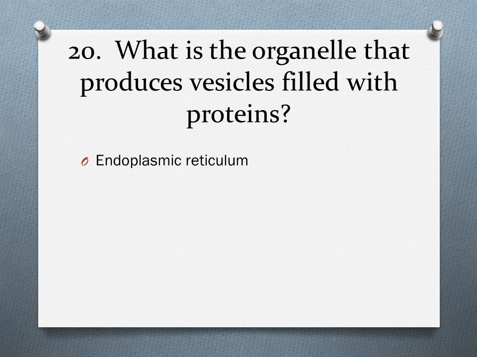 20. What is the organelle that produces vesicles filled with proteins? O Endoplasmic reticulum