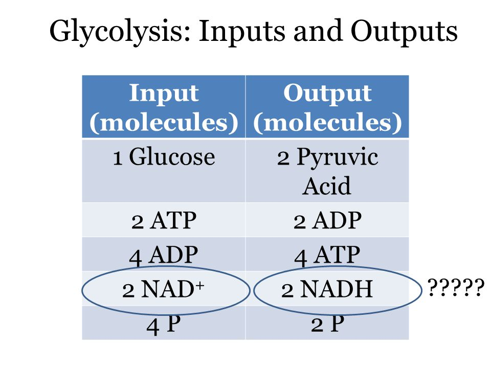 Glycolysis: Inputs and Outputs Input (molecules) Output (molecules) 1 Glucose2 Pyruvic Acid 2 ATP2 ADP 4 ADP4 ATP 2 NAD + 2 NADH 4 P2 P