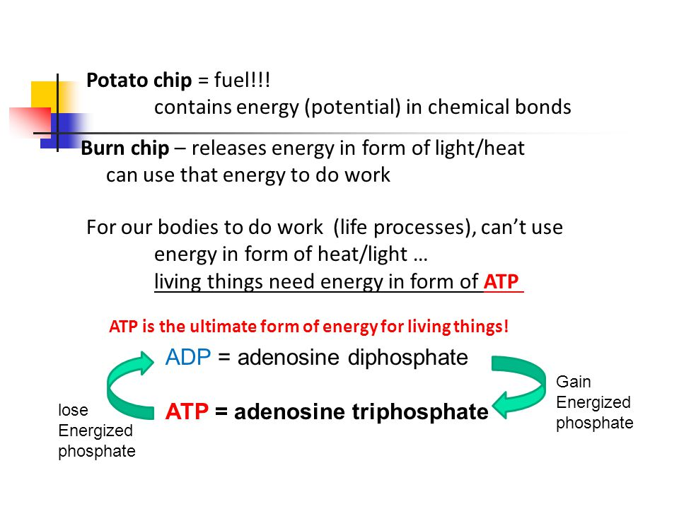 Potato chip = fuel!!.